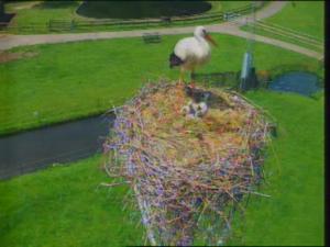 Karin Mattern is er als eerste bij: ze stuurde vandaag deze foto met drie kuikens in het nest!
