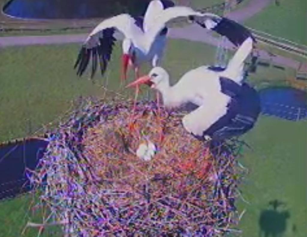 Karin Mattern stuurde deze foto in: er zijn al 5 eieren gelegd!